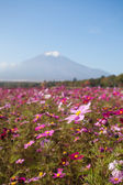 Fotografie Field of cosmos flowers and Mountain Fuji