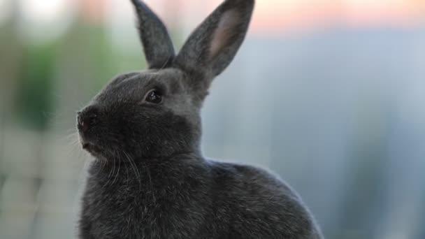 šedý králík, strach a strach