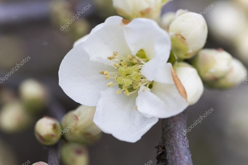 Weiße Blumen auf Baum im Frühjahr — Stockfoto © spetenfina #67954645