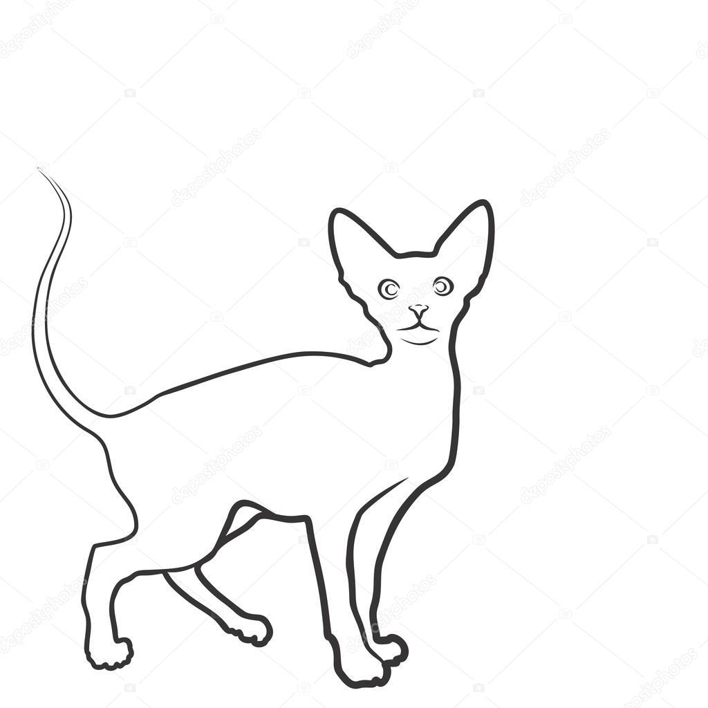 Illustrazione Disegno Del Gatto Domestico Disegno Del Gatto