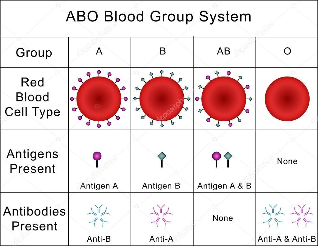 abo bloedgroep systeem stockfoto mrhighsky 62671667. Black Bedroom Furniture Sets. Home Design Ideas