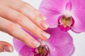 Photo French manicure and orchid flower