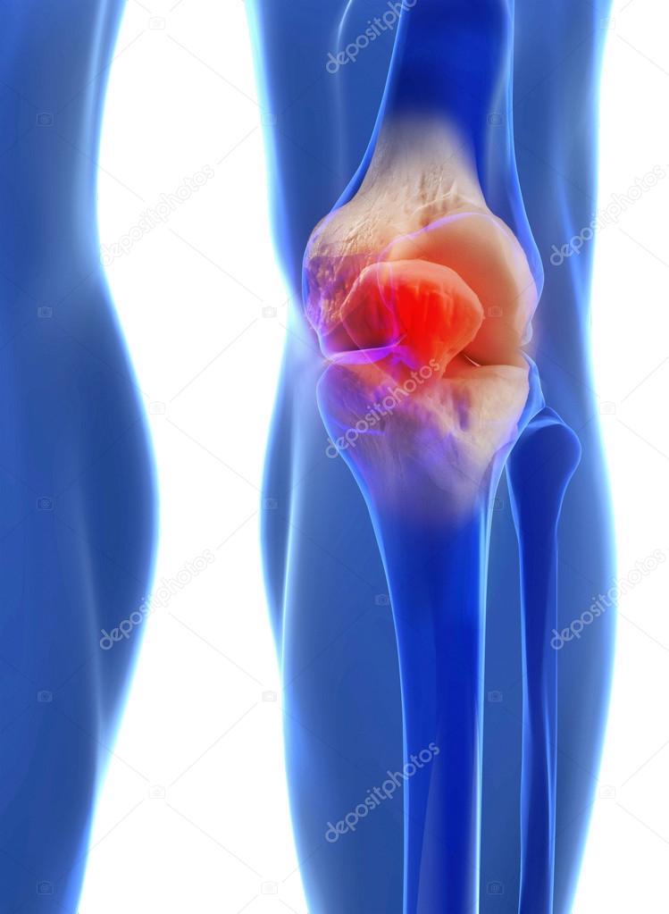 Anatomie der menschlichen Knie — Stockfoto © ingridat #56484059