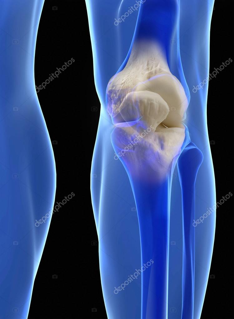 menselijke knie anatomie — Stockfoto © ingridat #56484357