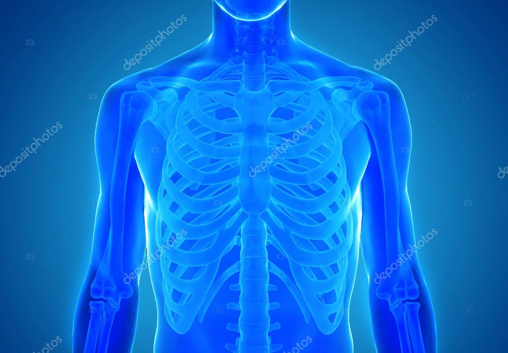 Vista de rayos x de la anatomía humana — Fotos de Stock © ingridat ...