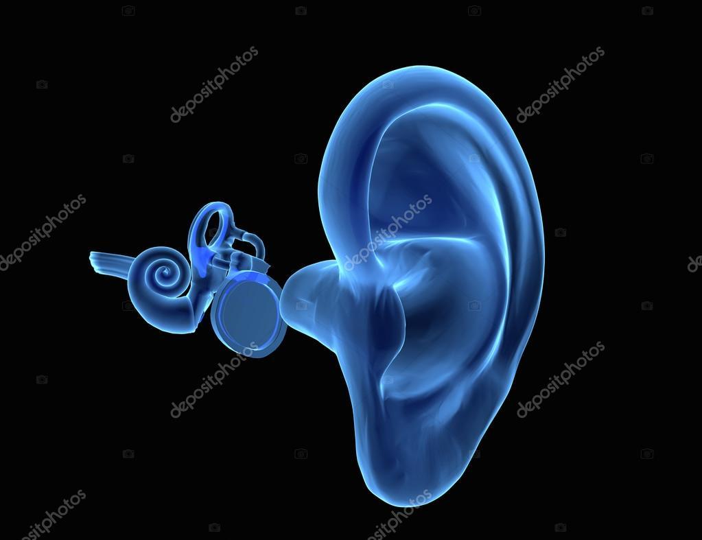 3D human ear anatomy — Stock Photo © ingridat #95056926