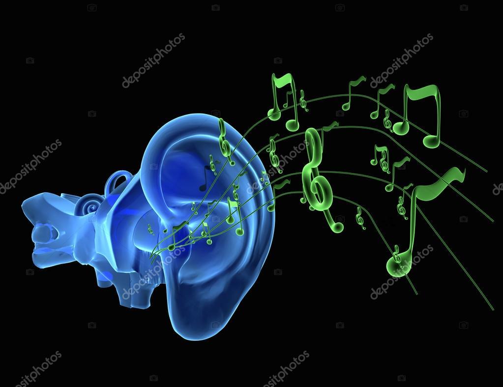 blaue Ohr Anatomie mit grünen Noten oder Musik — Stockfoto ...