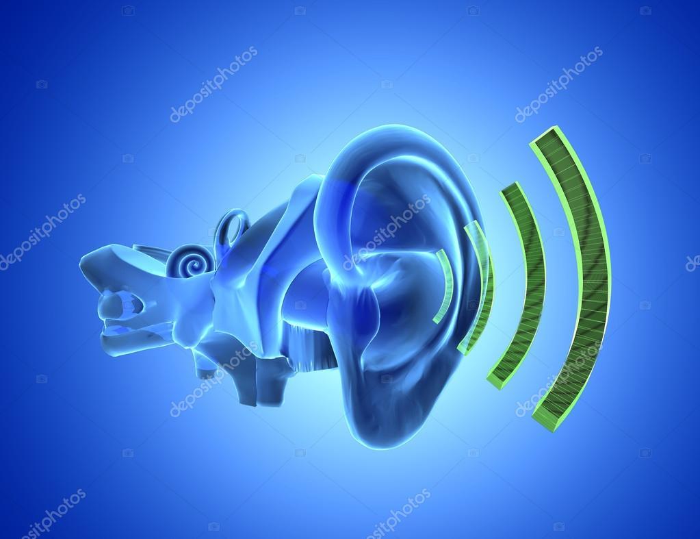 Anatomía de oído 3D con sonido — Fotos de Stock © ingridat #95945060