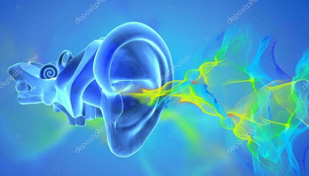 Anatomía de oído 3D con olas siund — Fotos de Stock © ingridat #95945346