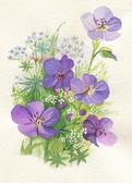 Purple alpské květiny