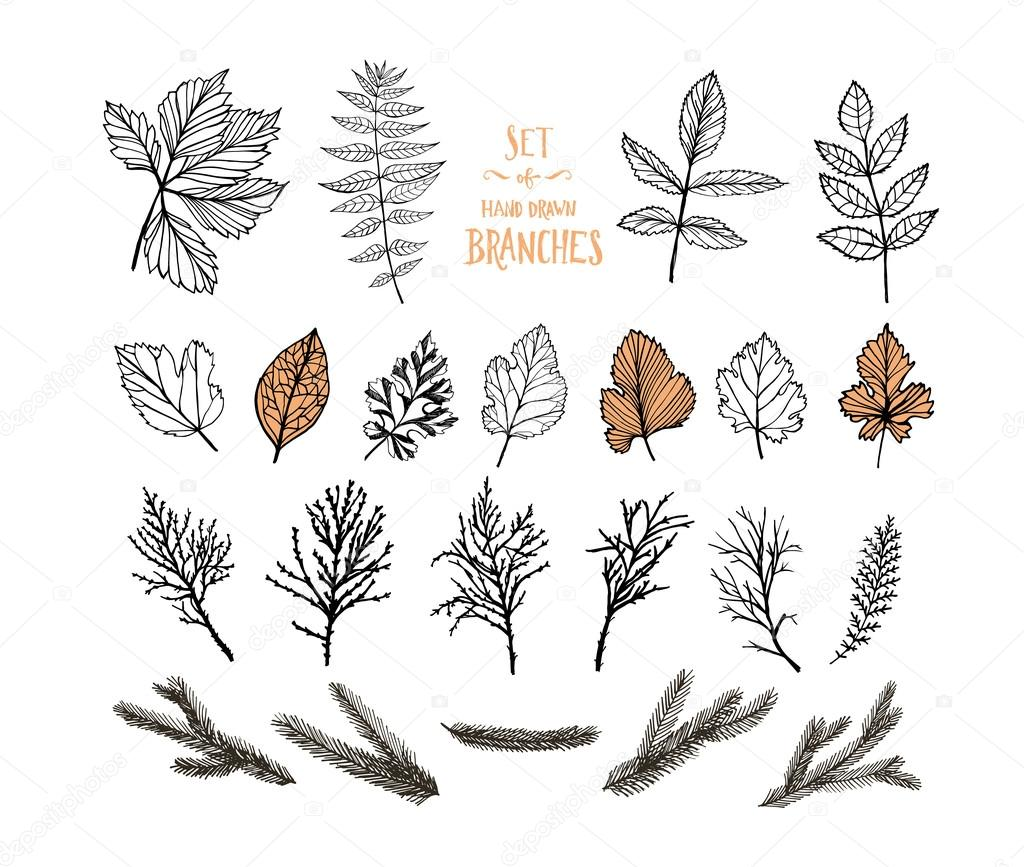 Collection of plants. Hand drawn leaves and branches.
