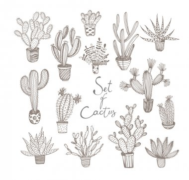 Collection of hand drawn cactuses in a pots.