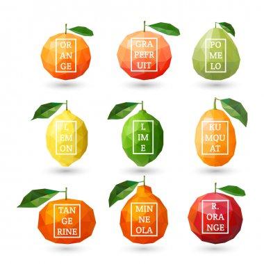 Set of polygonal citrus fruit - lemon, grapefruit, pomelo, orange, lime, kumquat, tangerine, minneola, red orange with design inscription. Vector illustration