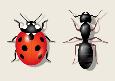 Insects: ladybug and ant. Vector illustration