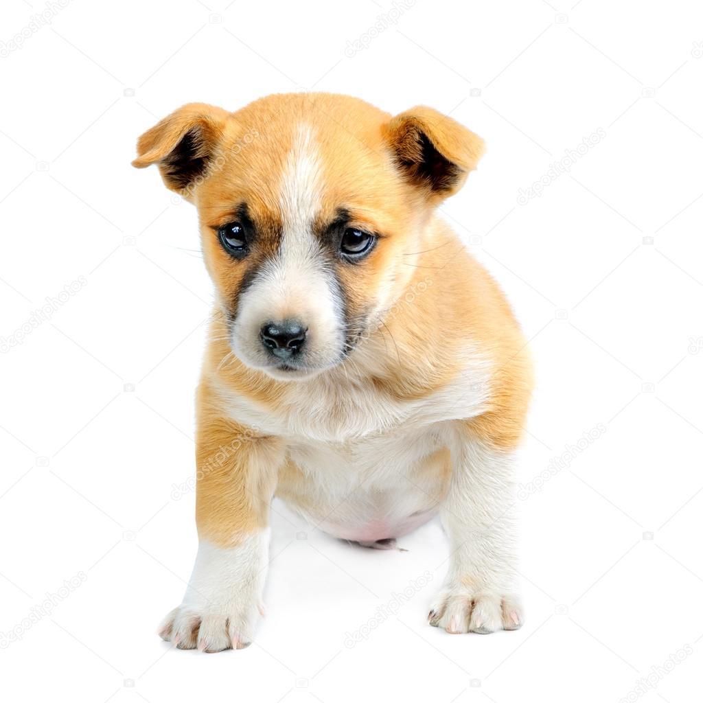 щенок мало