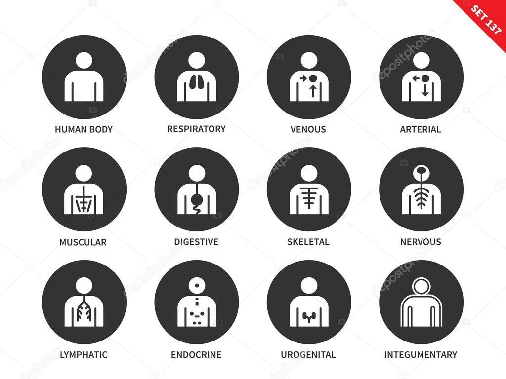 Menschliche Anatomie und Körpersysteme Vektor-Icons set ...