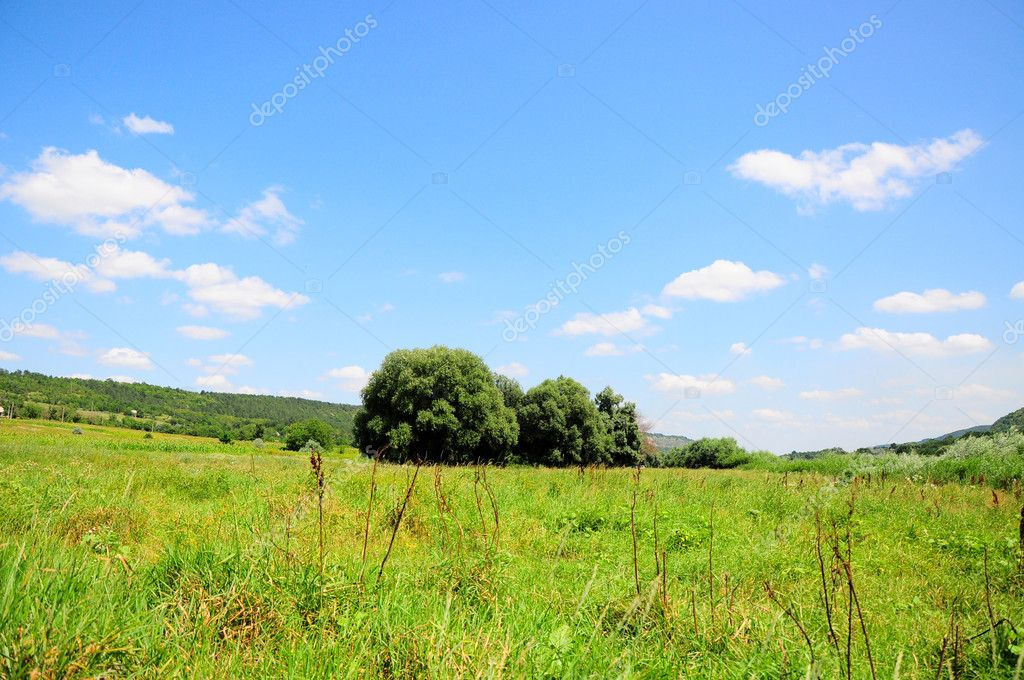 Green landscape in the village
