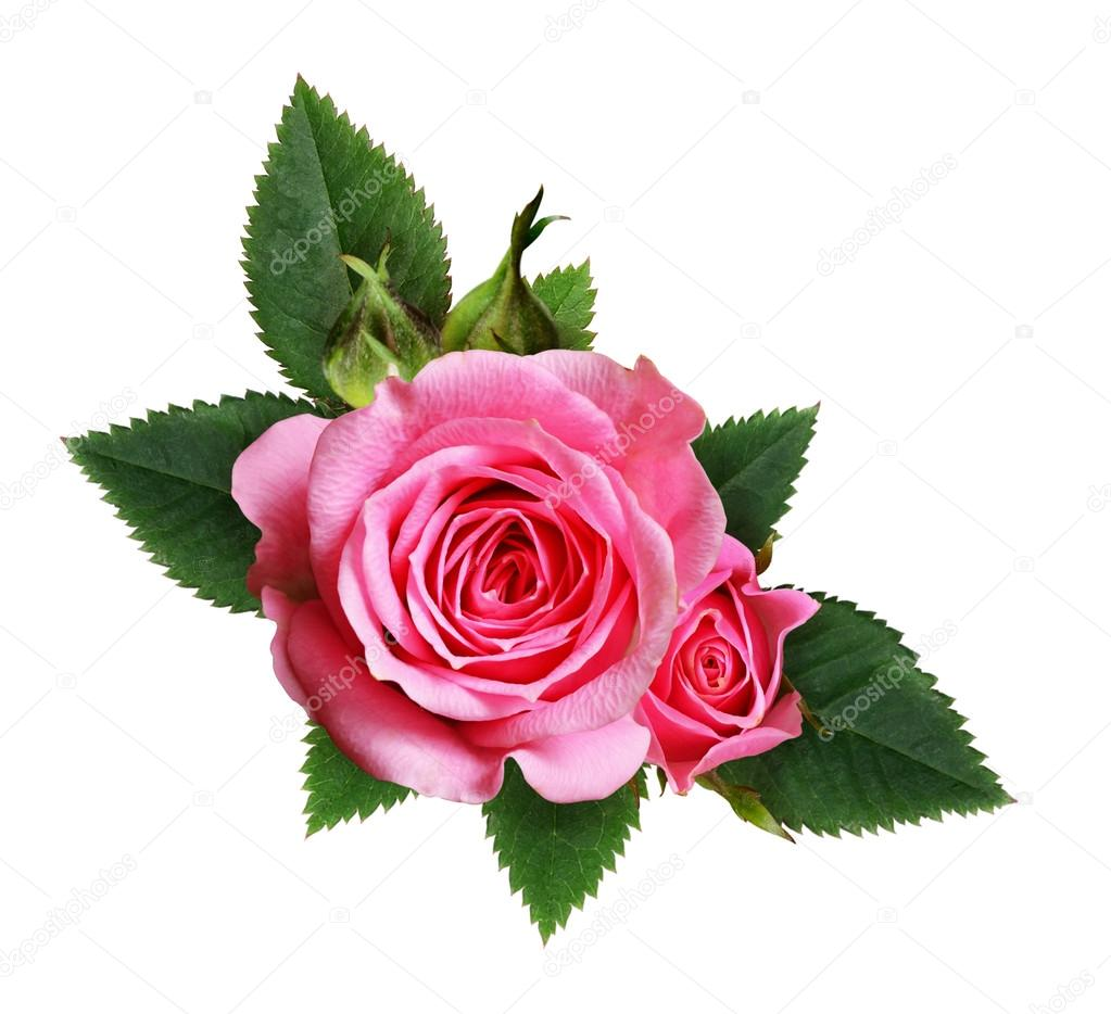 Fotos flores rosas composici n de flores rosas rosadas - Fotos de rosas de colores ...