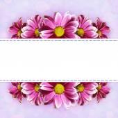 Růžový aster květiny linky opatření