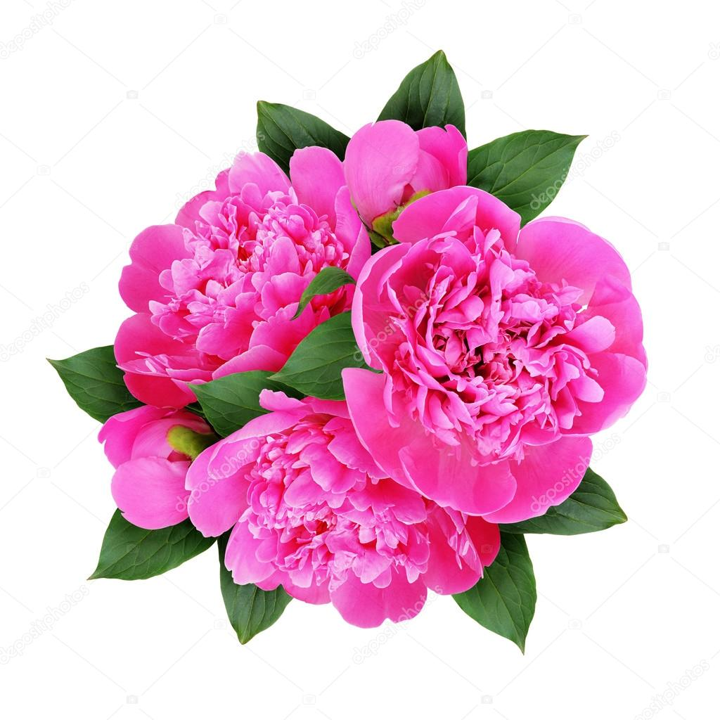 Pink peony flowers bouquet — Stock Photo © ksushsh #114349748