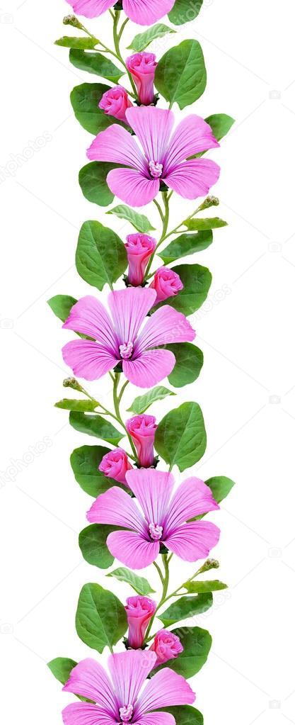 Imágenes Enredaderas De Flores Enredadera Flores De Patrones Sin
