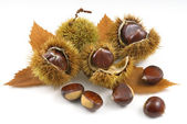 organis chestnuts
