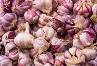 purple garlic at market
