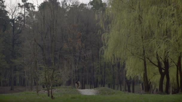 jarní louka s velkým stromem s čerstvé zelené listy
