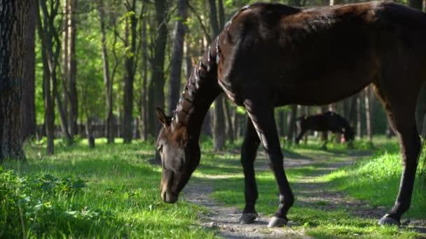 Egy nyári rét az erdő legelésző lovat