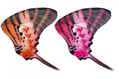 Isolated texture of five bar butterfly on white