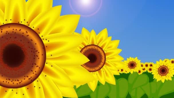 Slunečnice se objevovat a kymácí ve větru 4k