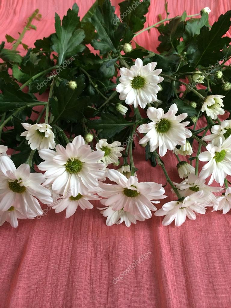 White daisies on a salmon colored blanket — Stock Photo © mbudley ...