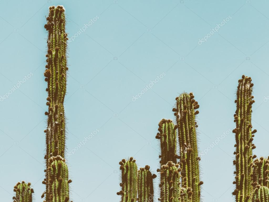 Green Cactus Fields