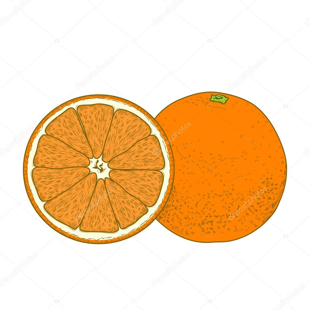 Tranches de fruits orange isol s sur fond blanc dessin au - Orange dessin ...