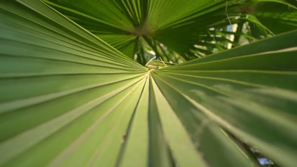 Large green palm leaf with detailed pattern waving with wind close view
