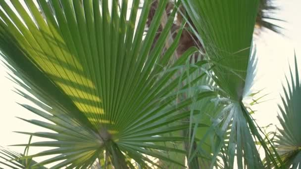 Big palm tree leaves swinging with summer wind in rainforest.