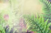 Fotografie zelené vějíře listí