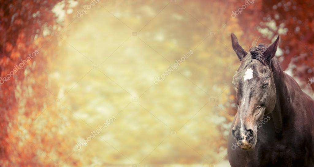 Happy horse on autumn background