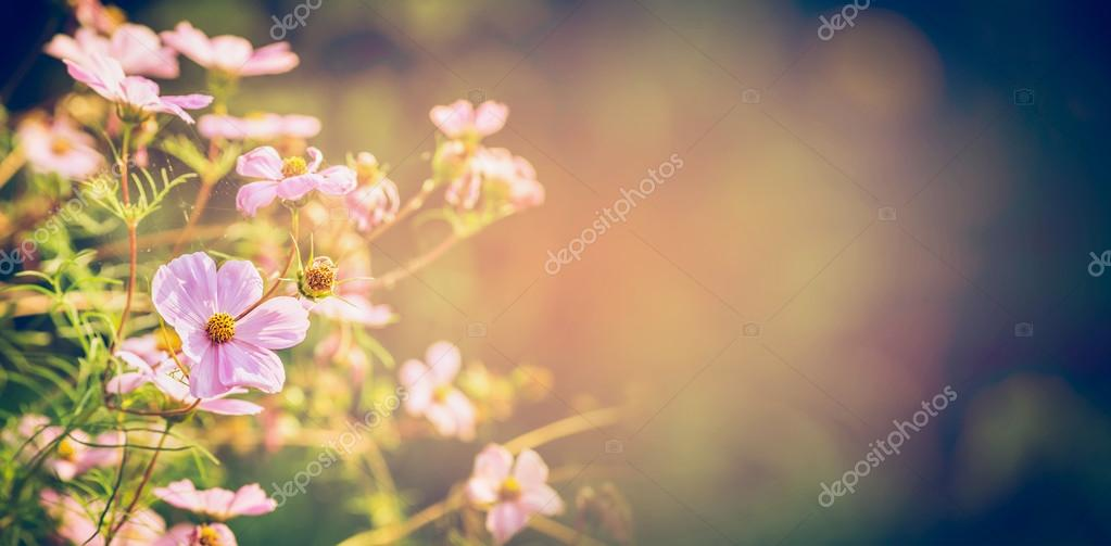 Beautiful flowers on garden