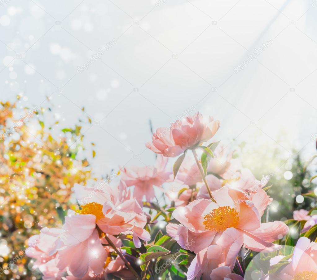 Pink Pastel Flowers Background Stock Photo Vfotografie 114543460