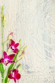 fialové květy orchidejí