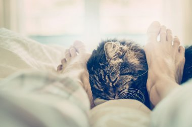 Cat by female feet in bed