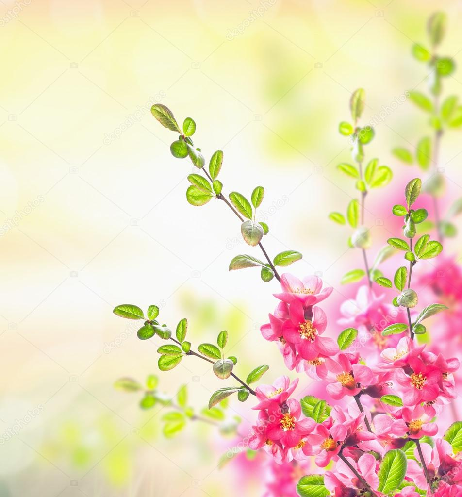 Spring Summer Nature Background With Pink Blooming Bush Floral Corner Border Stock Photo