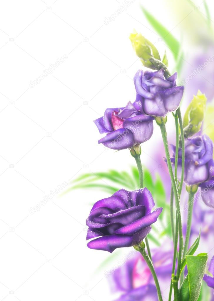 Purple flowers bunch on white background