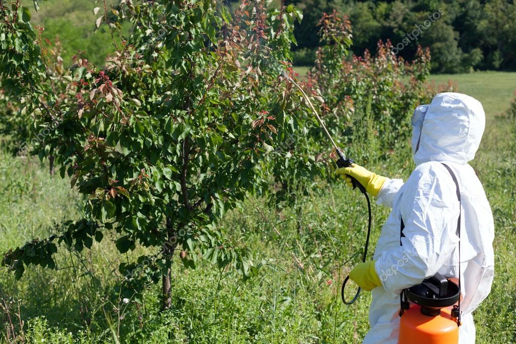 Картинки по запросу Чем и когда опрыскивать плодовые деревья