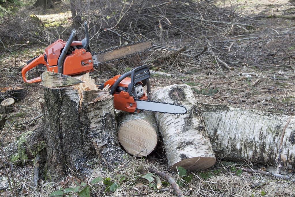 Chainsaw ready to work, felled birch