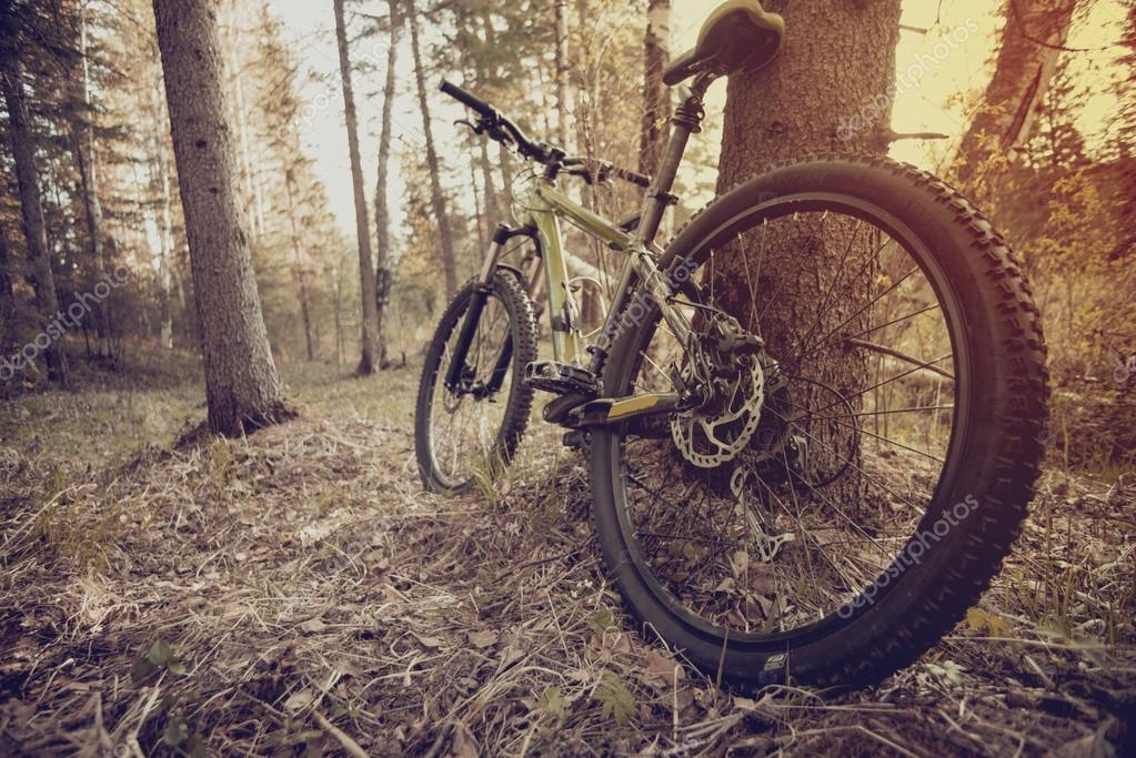 Фотообои mountain bike on the trail in the beautiful summer forest.