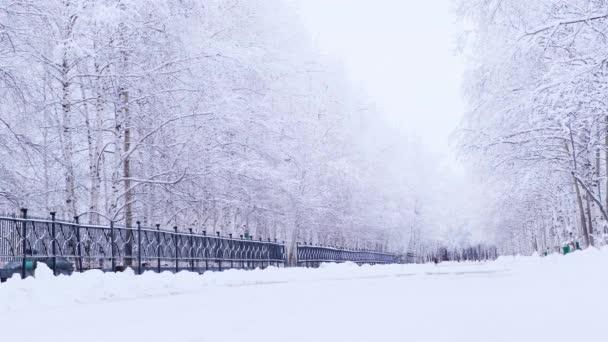 Winterlandschaft mit schneebedeckten Birken im Park