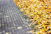 Photo Paving with autumn yellow leaves