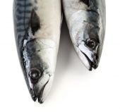 Fotografie Dvě makrely ryby